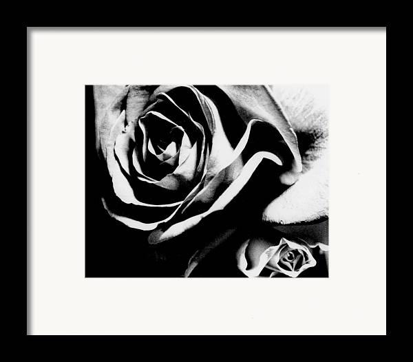 Still Life Framed Print featuring the photograph Roses Study 1 by Lisa Spencer