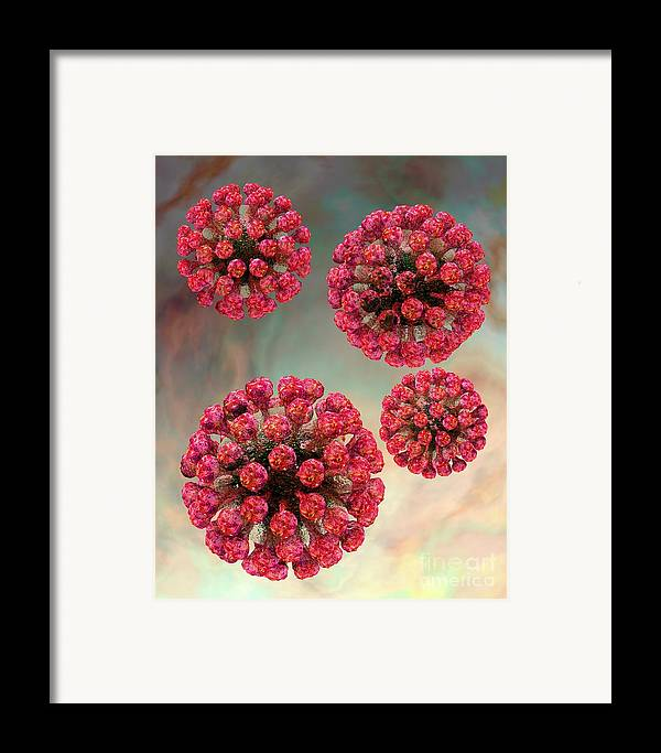 Biological Framed Print featuring the digital art Rubella Virus Particles by Russell Kightley