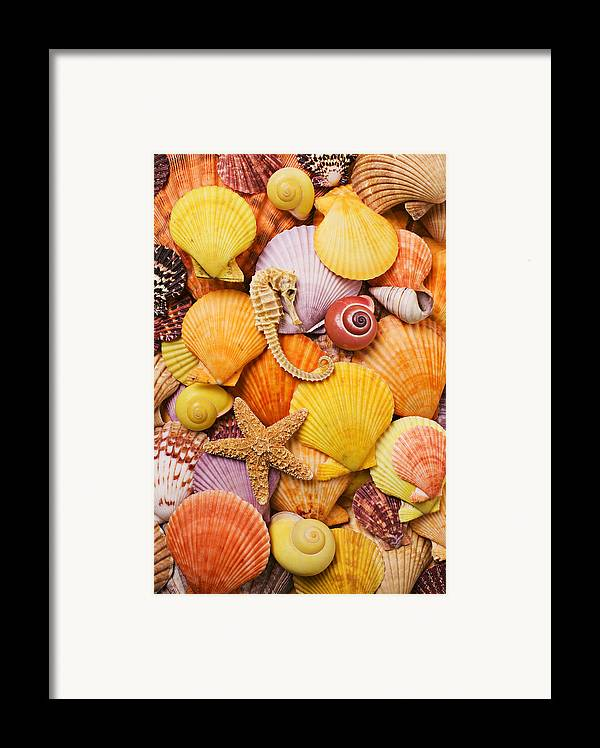 Sea Shells Starfish Framed Print featuring the photograph Sea Horse Starfish And Seashells by Garry Gay