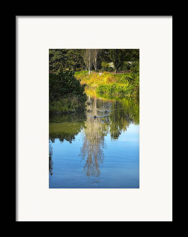 Park Framed Print featuring the photograph Serene Reflection by Julie Palencia
