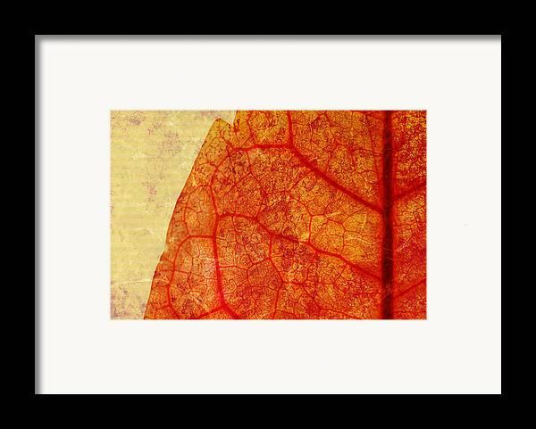 Brett Framed Print featuring the digital art Silent Poetry by Brett Pfister