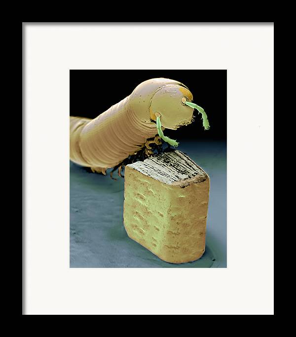 Sem Framed Print featuring the photograph Smallest Book And Millipede, Sem by Volker Steger