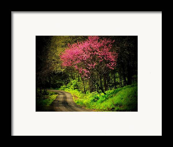 Mountain Road Framed Print featuring the photograph Spring Mountain Road by Michael L Kimble