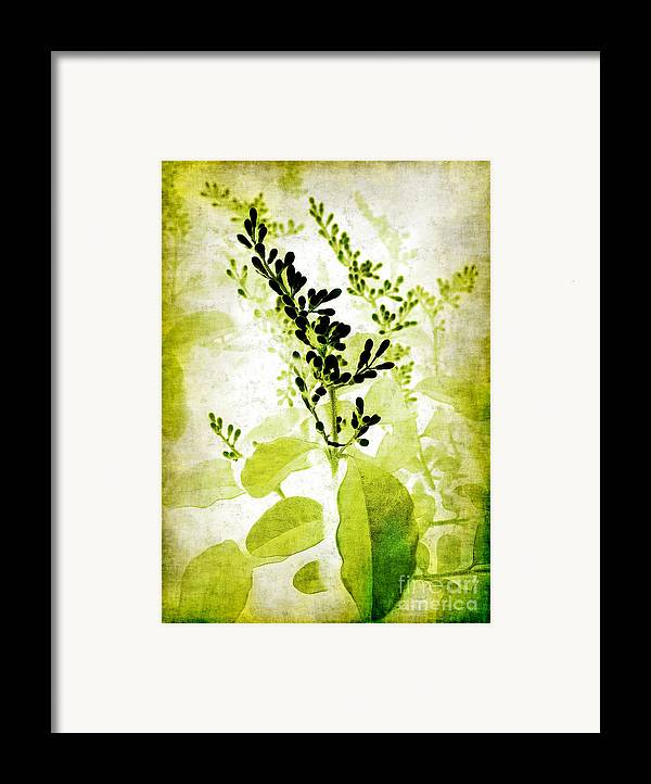 Leaves Framed Print featuring the photograph Study In Green by Judi Bagwell