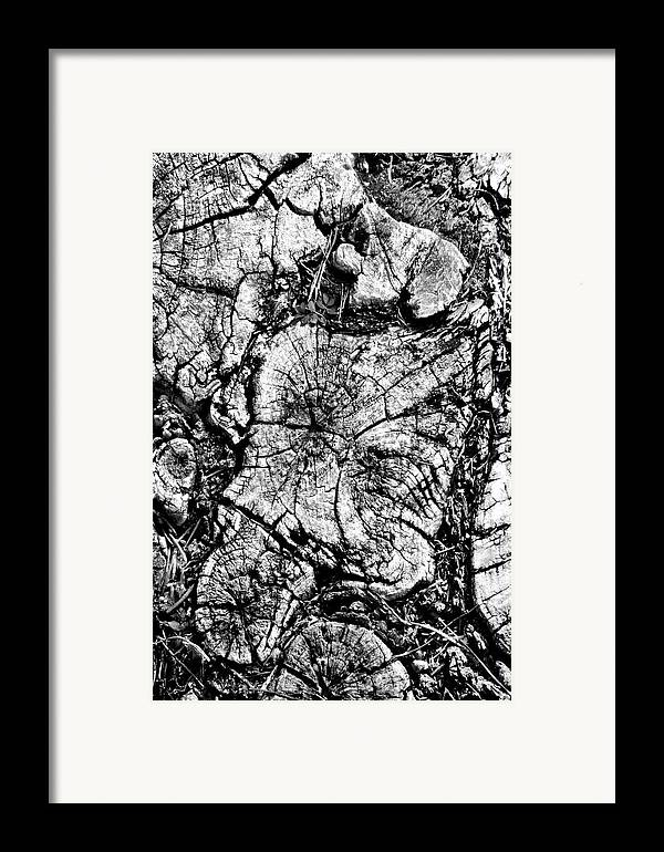 Tree Stump Framed Print featuring the photograph Stumped by Mike McGlothlen