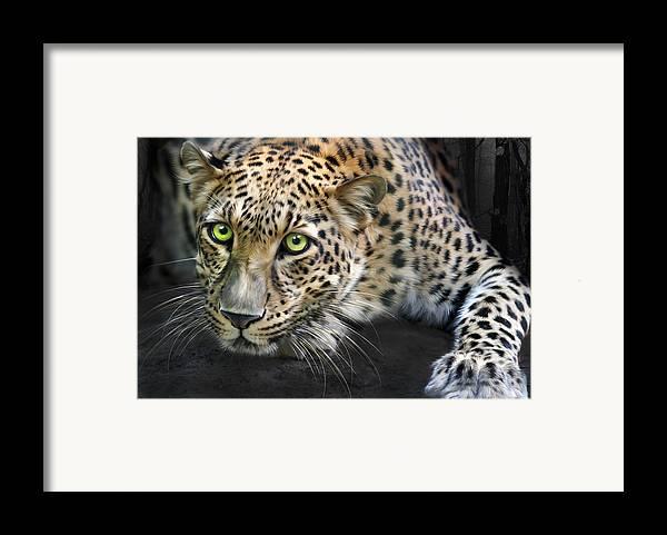 Sundari Framed Print featuring the digital art Sundari by Big Cat Rescue