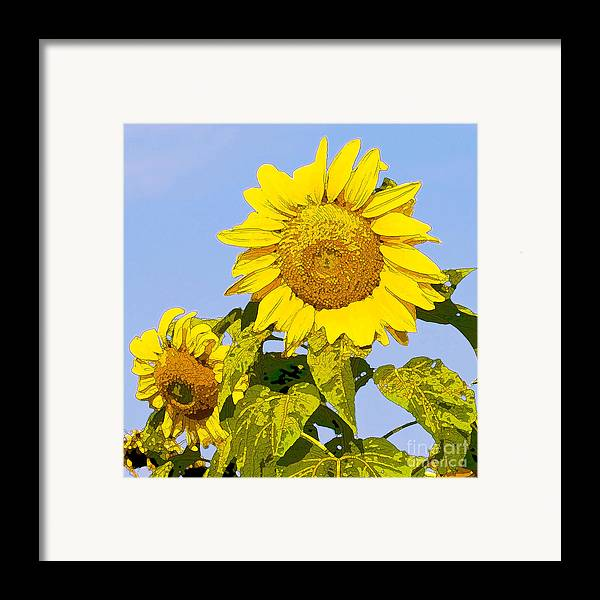 Sunflowers Framed Print featuring the digital art Sunflowers In Morning by Artist and Photographer Laura Wrede