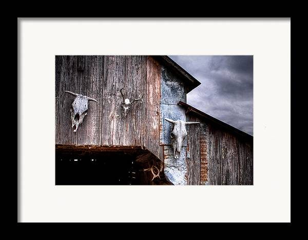 Cow Framed Print featuring the photograph The Broad Side Of A... by Pixel Perfect by Michael Moore