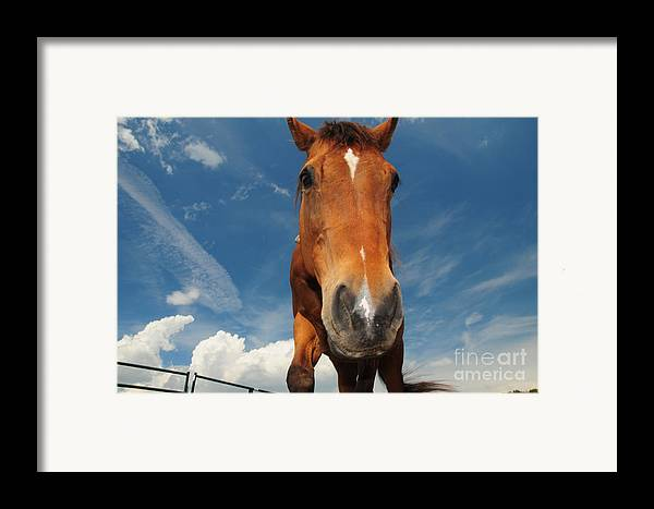 The Curious Horse Framed Print featuring the photograph The Curious Horse by Paul Ward