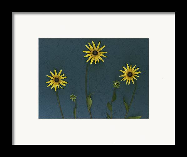 Arranged Framed Print featuring the photograph Three Yellow Flowers by Deddeda