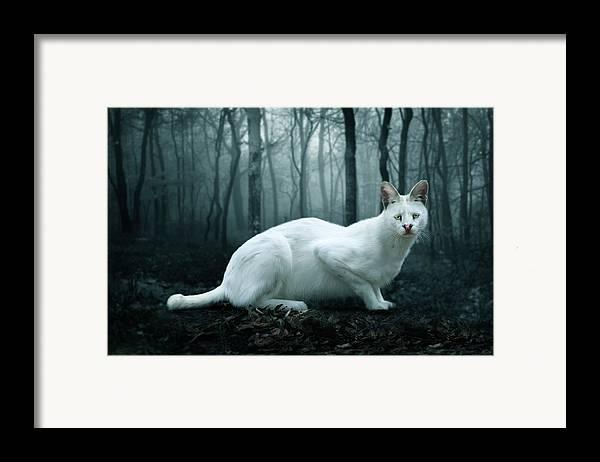 Tonga Framed Print featuring the digital art Tonga by Big Cat Rescue