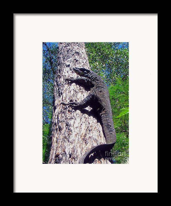 Goanna Framed Print featuring the photograph Up Ya Go by Joanne Kocwin