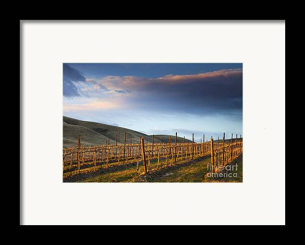 Vineyard Framed Print featuring the photograph Vineyard Storm by Mike Dawson