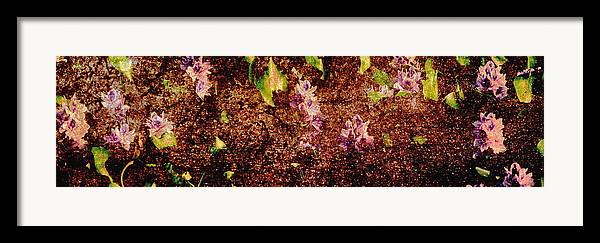 Abstract Framed Print featuring the photograph Water Flowers Vietnam by Skip Nall