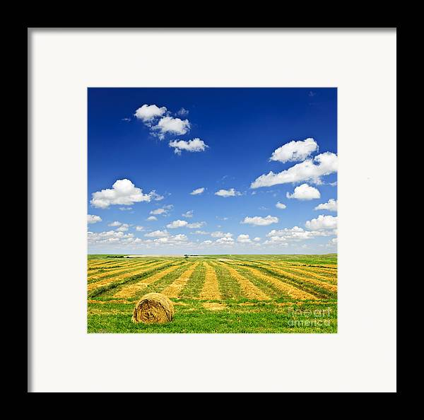 Agriculture Framed Print featuring the photograph Wheat Farm Field At Harvest by Elena Elisseeva