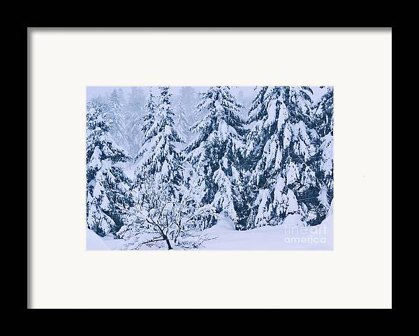 winter Prints Framed Print featuring the photograph Winter Coat by Aimelle