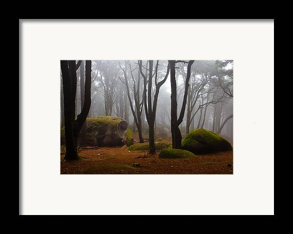 Forest Framed Print featuring the photograph Wonderland by Jorge Maia