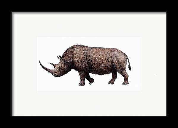 Coelodonta Antiquitatis Framed Print featuring the photograph Woolly Rhinoceros, Artwork by Mauricio Anton