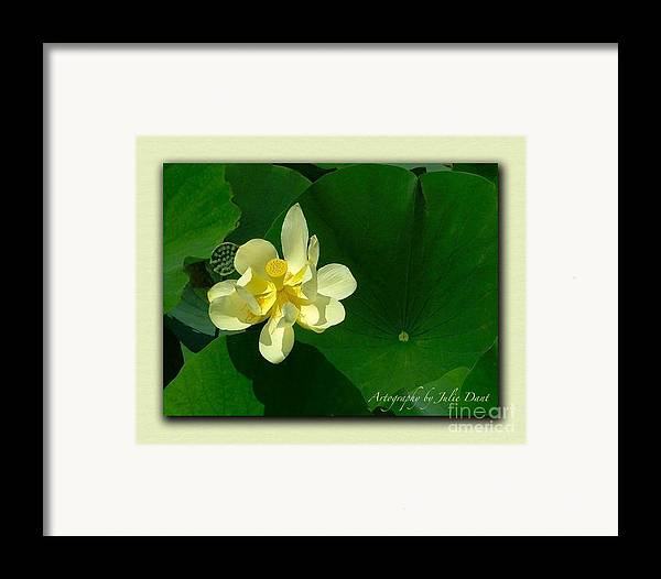 Flowers Framed Print featuring the photograph Yellow Lotus Blossom In Mississippi by Julie Dant