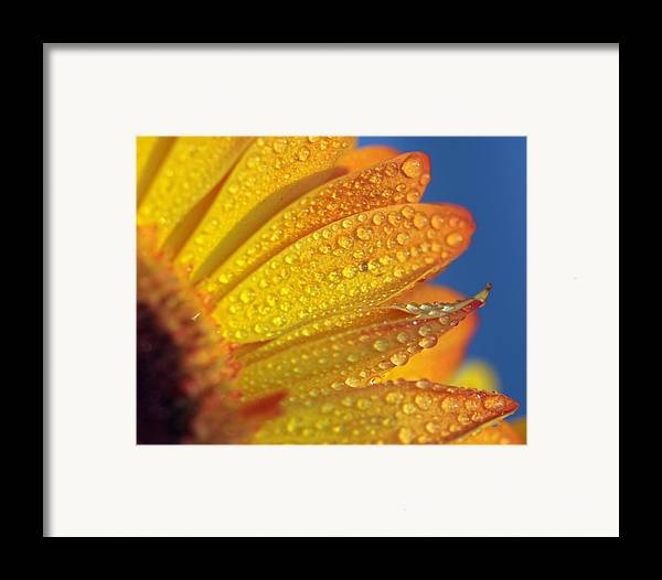 Horizontal Framed Print featuring the photograph Yellow Wild Flower by the*Glint