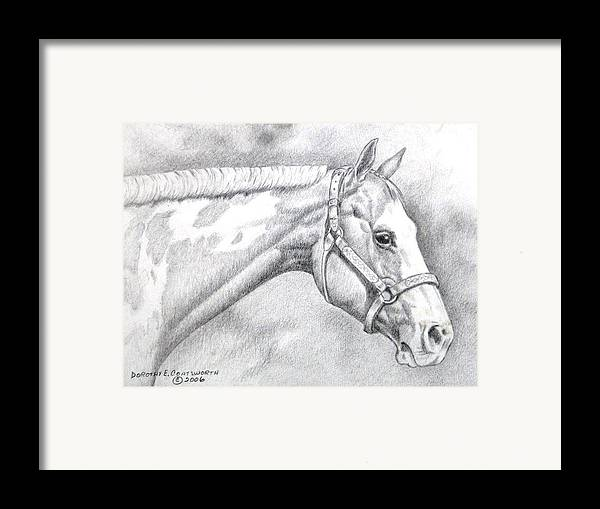 Framed Print featuring the drawing Paint Horse by Dorothy Coatsworth