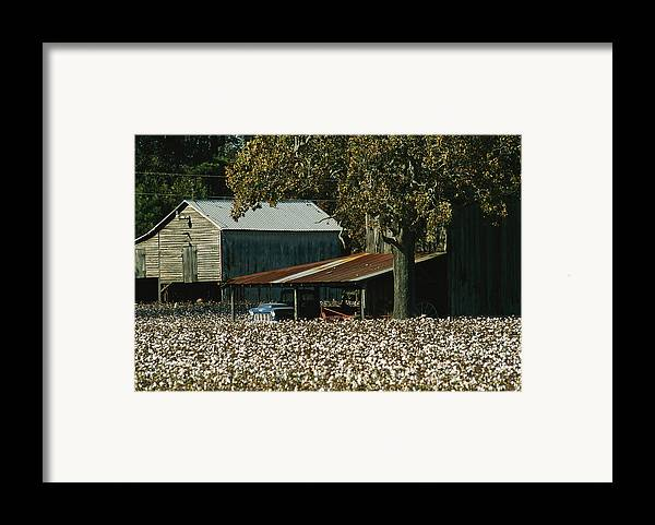 Farmers And Farming Framed Print featuring the photograph A Cotton Field Surrounds A Small Farm by Medford Taylor