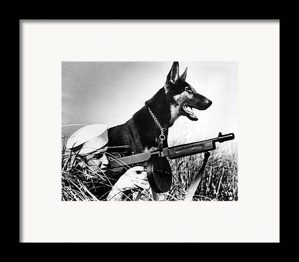 1940s Candid Framed Print featuring the photograph A Trained German Shepherd Sitting Watch by Everett