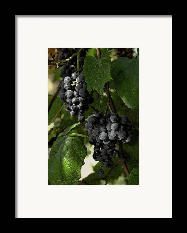 Grapes Framed Print featuring the photograph Almost Harvest Time by Michael Flood