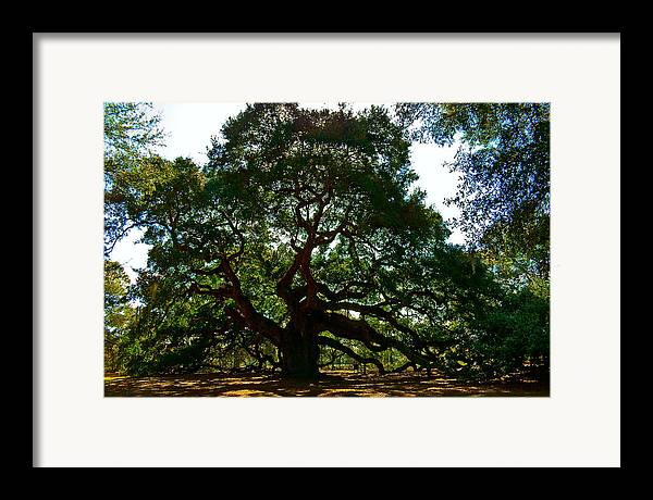 Tree Framed Print featuring the photograph Angel Oak Tree 2004 by Louis Dallara