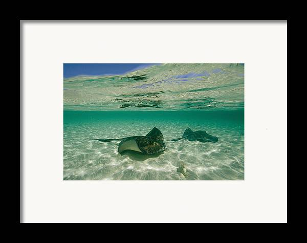 Atlantic Islands Framed Print featuring the photograph Aquatic Split-level View Of Two by Wolcott Henry