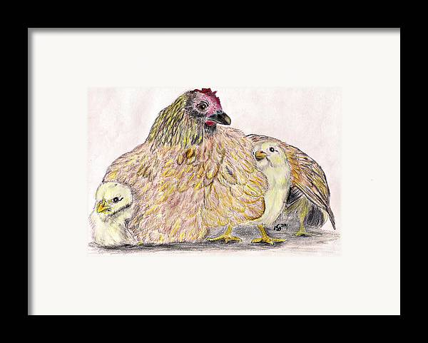 Chickens Framed Print featuring the drawing As A Hen Gathereth Her Chickens Under Her Wings by Marqueta Graham