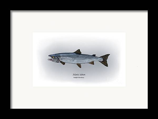 Atlantic Salmon Framed Print featuring the drawing Atlantic Salmon by Ralph Martens