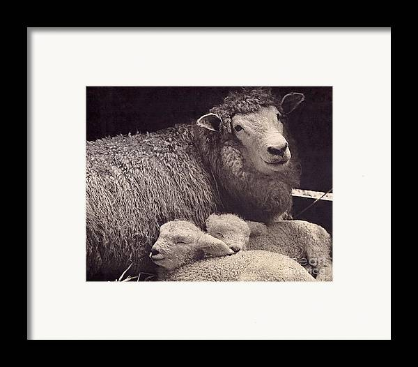 Photography Framed Print featuring the photograph Babes In A Manger by Sean Griffin