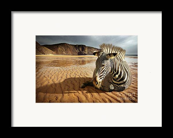 Africa Framed Print featuring the photograph Beach Zebra by Carlos Caetano