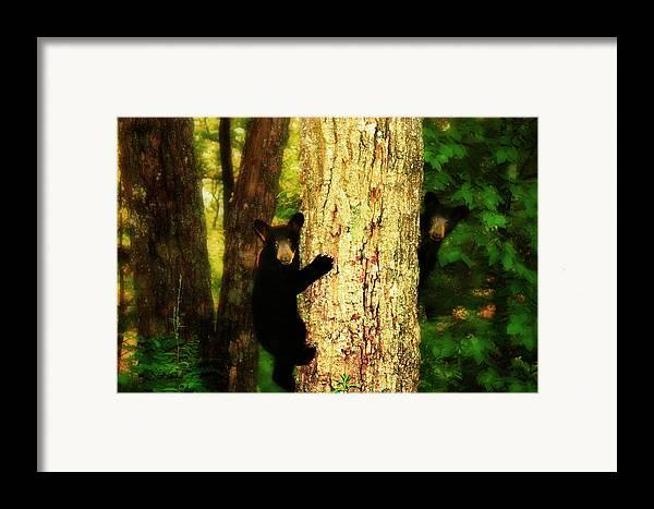 Black Bear Cubs Framed Print featuring the photograph Black Bear Cubs by Gray Artus