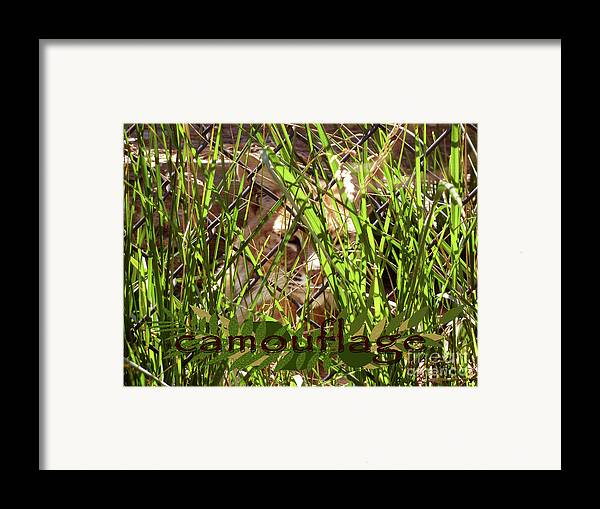 Camouflage Framed Print featuring the photograph Camouflage by Methune Hively