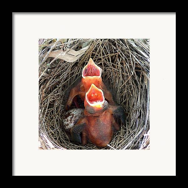 Cardinal Framed Print featuring the photograph Cavernous Cardinals by Al Powell Photography USA