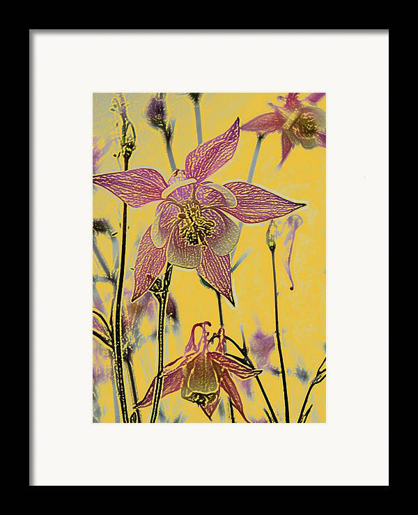 Columbine Framed Print featuring the photograph Columbine by Michael Peychich
