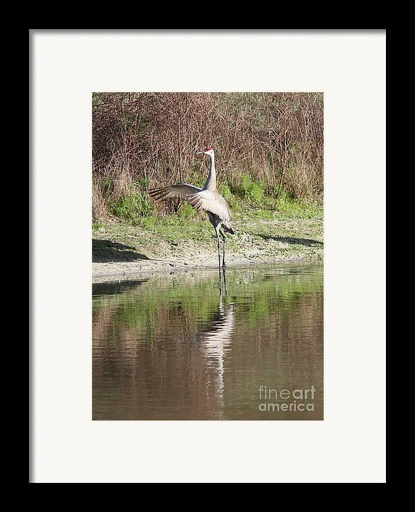 Bird Framed Print featuring the photograph Dancing On The Pond by Carol Groenen