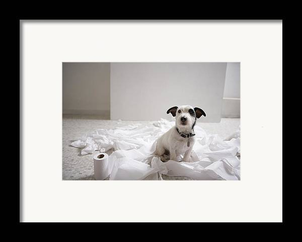 Horizontal Framed Print featuring the photograph Dog Sitting On Bathroom Floor Amongst Shredded Lavatory Paper by Chris Amaral