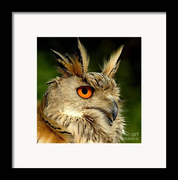 Wildlife Framed Print featuring the photograph Eagle Owl by Jacky Gerritsen