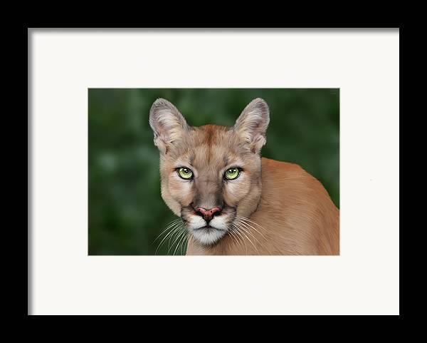 Enya Framed Print featuring the digital art Enya by Big Cat Rescue