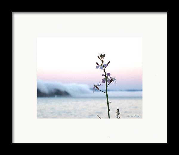 Fog Framed Print featuring the photograph Evening Fog Rolling In by Sabine Stetson