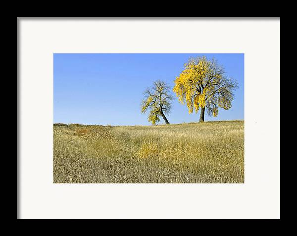 Fall. Blue. Sky. Weeds. Yellow. Grass. Fields. Water. Rain. Clouds.fall Colors Photography. Mixed Media. Mixed Media Photography. Mixed Media Fall Colors. Fine Art Fall Colors. Colorado Fall Colors. Fall Greeting Cards. Yellow Fall Color Photography. Fall Colors In Fort Collins Co. Gallery Fine Art Photography. Fall Landscape Photography. Framed Print featuring the photograph Fall Days In Fort Collins Co by James Steele