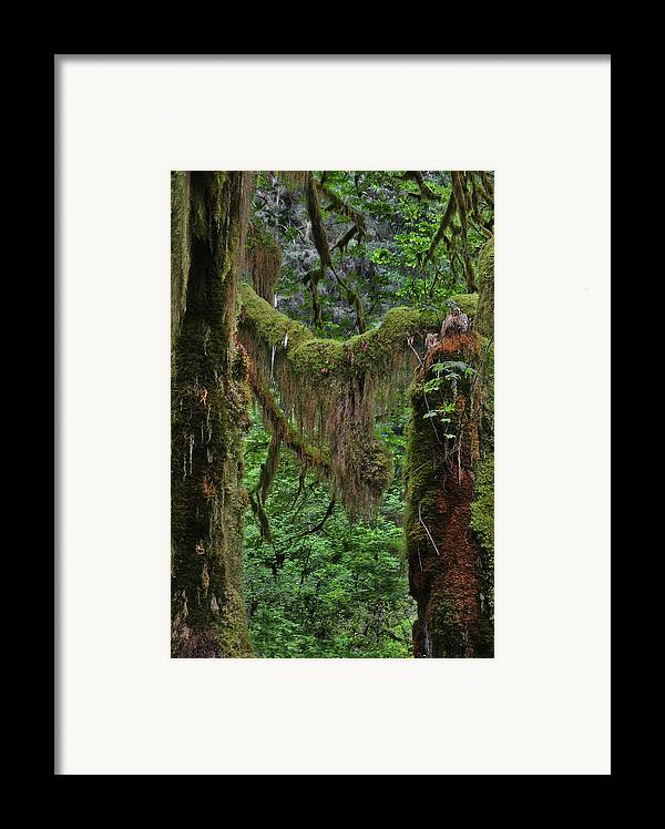 Rainforest Framed Print featuring the photograph Fascinating Hoh Valley - Hoh Rain Forest Olympic National Park Onp Wa Usa by Christine Till