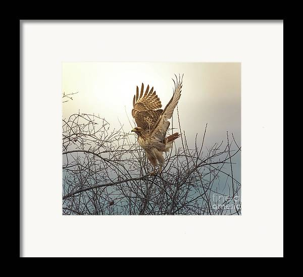 Animal Framed Print featuring the photograph Flashing The Truckers by Robert Frederick