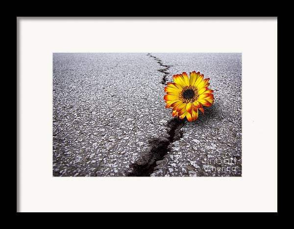Abstract Framed Print featuring the photograph Flower In Asphalt by Carlos Caetano