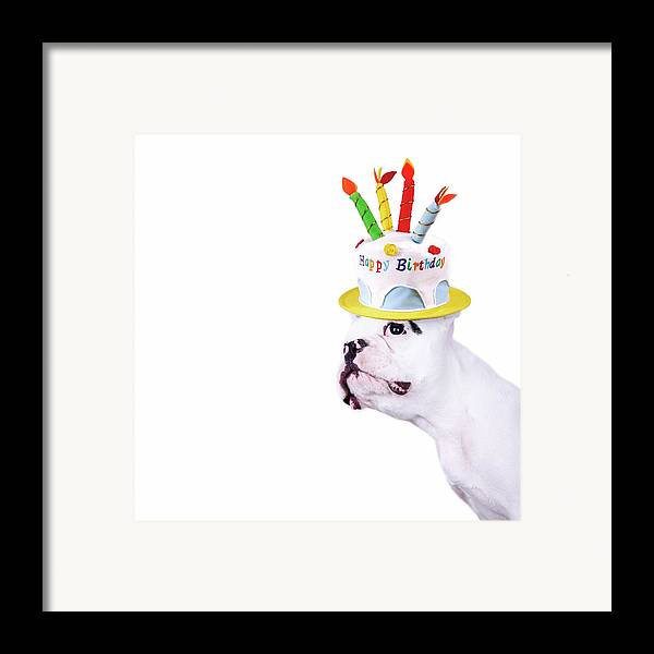 Square Framed Print featuring the photograph French Bulldog With Birthday Cake by Maika 777