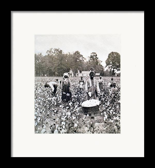 Georgia Framed Print featuring the photograph Georgia Cotton Field - C 1898 by International Images