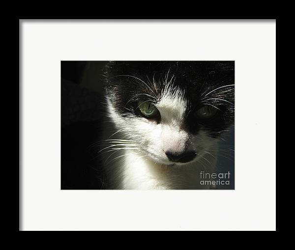 Cat Eyes Framed Print featuring the photograph Go Ahead Make My Day by Kristine Nora